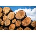 Utlysning - 58 miljoner kronor till forskning om bioekonomi och skogsbruk