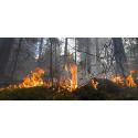 Eldningsförbud utökas