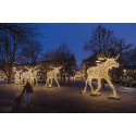Nu på lördag tänds 710 708 energismarta juleljus i Stockholm City