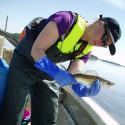 Fiskens nettointag av energi avgör var den trivs