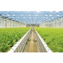Klimatsmart grönt på vintern kommer från hållbara växthus