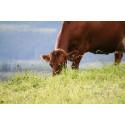 Pressinbjudan: Livsmedelsproduktionen i Dalarna ska öka!