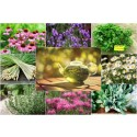 Global Herbal Market Future Outlook: Market Trends, Growth and Competition Landscape by Regions!