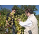 Full suksess for Crozes Hermitage Alléno & Chapoutier