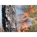 Maj inleder säsongen för skogsbränningar