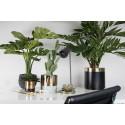 Växter för hem och kontor