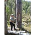 Gammelskog i fokus på exkursion