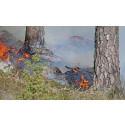 Nu startar säsongen för våra naturvårdande skogsbränningar