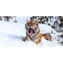 Vinter i Dyreparken – 700 dyr venter på besøk