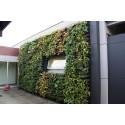 BGreen-it Living Wall – Grön vägg på naturens villkor!