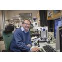 30 miljoner kronor till forskning om malariaparasiten