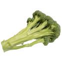 Broccoloco®, en mildare och sötare broccoli med läckra stjälkar!
