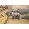 Noshörningsunge född på Kolmården