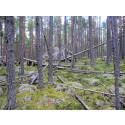 Gemensamt projekt om Oreskogarnas brukande och bevarande