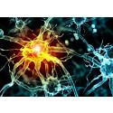 Forskningsmedel från SLS till MS och SLE