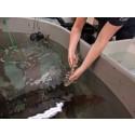 Havets Hus fyller 25 år och släpper ut 25 hajar i havet