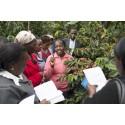 Efterfrågan ökar medan tillgången minskar: Zoégas investerar ytterligare i Kenya