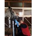 Vi följer med Hästodontolog och leg. veterinär Mats Scharin på ett tandvårdsbesök..