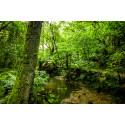 Verdens Skove vil hjælpe blå minister med at blive grøn