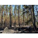 Årets första naturvårdsbränning i Kronobergs län är genomförd i naturreservatet Storasjöområdet i Uppvidinge kommun