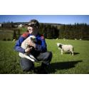 Frokostseminar: Hvordan går det egentlig i norsk landbruk?