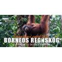 Upplev Borneos regnskog och otroliga djurliv
