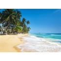 10 anledningar att besöka Sri Lanka i höst
