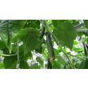Historien om agurkene og de små, nyttige insektene