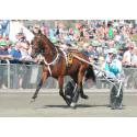Norrlands största sportevent gästas av världens snabbaste häst