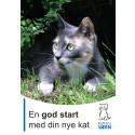En god start med din nye kat