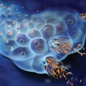 Akademiska först med genmodifierat virus mot neuroendokrina tumörer