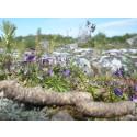 Grågåsens bajs viktigt för växtligheten på öar i Östersjön