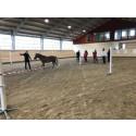 HALT - ledarskapsträning med hästen som coach