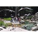 Pünktlich zum Ferienbeginn: Große Seevogelvoliere wieder eröffnet