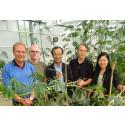 Mer mat och bioenergi ur kassava med nya metoder