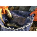 Fiske av ål i havet stoppas under tre månader