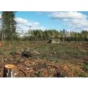 Lönebeskeden fortsätter skövla skog