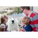 Polar World – världens största isbjörnsanläggning