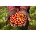 Klimatkompensation genom Fairtrade Carbon Credits nu på svenska marknaden