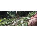 Rapport från regnskogen - hur Tailor Store blir 100% klimatneutralt
