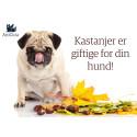 Ikke la hunden spise kastanjer!