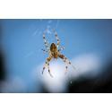 7 tips for å holde edderkoppene unna