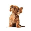 Ny undersökning visar: Varannan hund och katt är rädd för fyrverkerier  - Här är tipsen på hur du underlättar för våra fyrbenta vänner