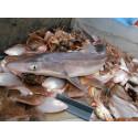 Mest hotade i europeiskt fiske: storvuxna arter och Medelhavsfisk