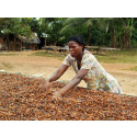Fler kvinnor på Rainforest Alliances utbildningar