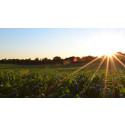 Seminarium: Klimatanpassning för säkrad livsmedelsproduktion – globalt och nationellt