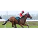 Junior Reuterskiöld sadlar ut fyra hästar i Svenskt Derby