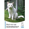 Skal min kat neutraliseres?