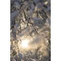 Tag perfekte billeder på de mørke vinterdage