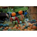 Höstlov och Halloween-firande i Danmark nästa vecka